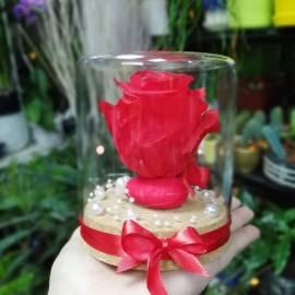Вечна роза - червена