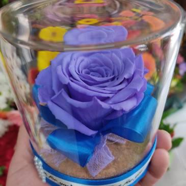 Вечна роза синьо-лилава