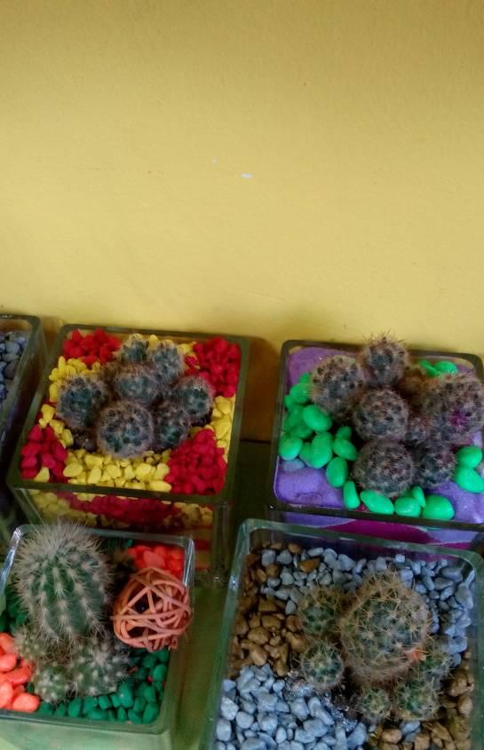 Аранжировка с кактуси